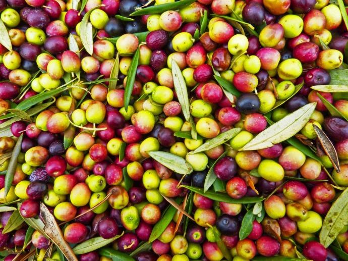 olives-1119500_1920.jpg